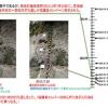 2019年2月4日に千葉県庁で行った記者会見で「捏造・改ざん・試料盗掘・IUGSへの報告」の解説で使用したスライド資料を公開します。